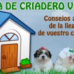 consejos para cuidar tu perro