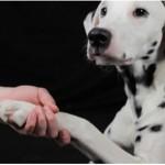 Beneficios de los perros para el bienestar humano