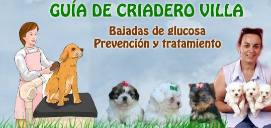 tratamiento de enfermedades perros