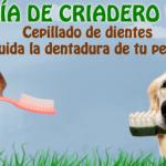 Cepillado de dientes en perros