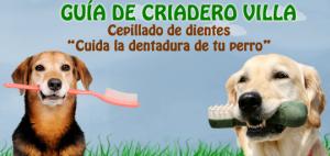 blog villa dientes perros