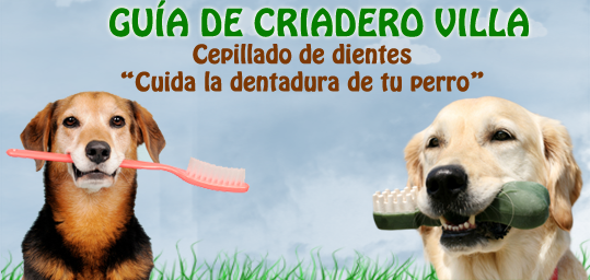 cuidar dentadura de tu perro cepillar