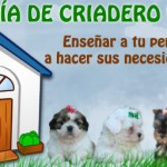enseñar necesidades perros lugar