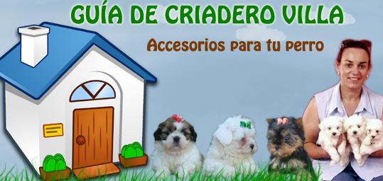 accesorios para tu perro de criadero villa